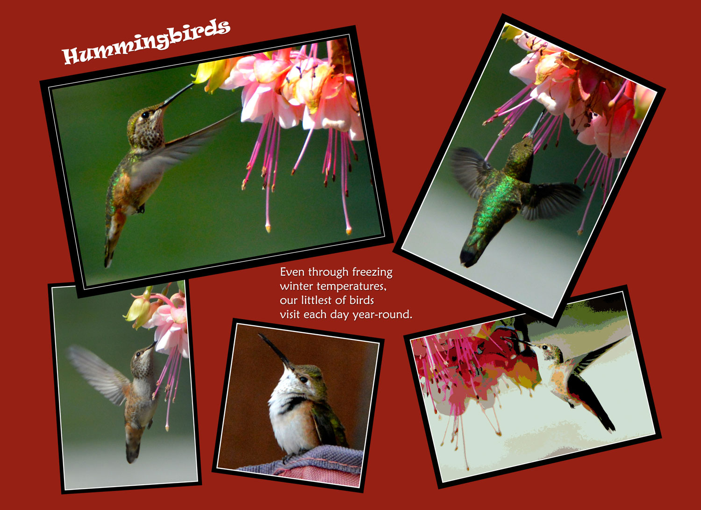_005-006-Hummingbirds-R