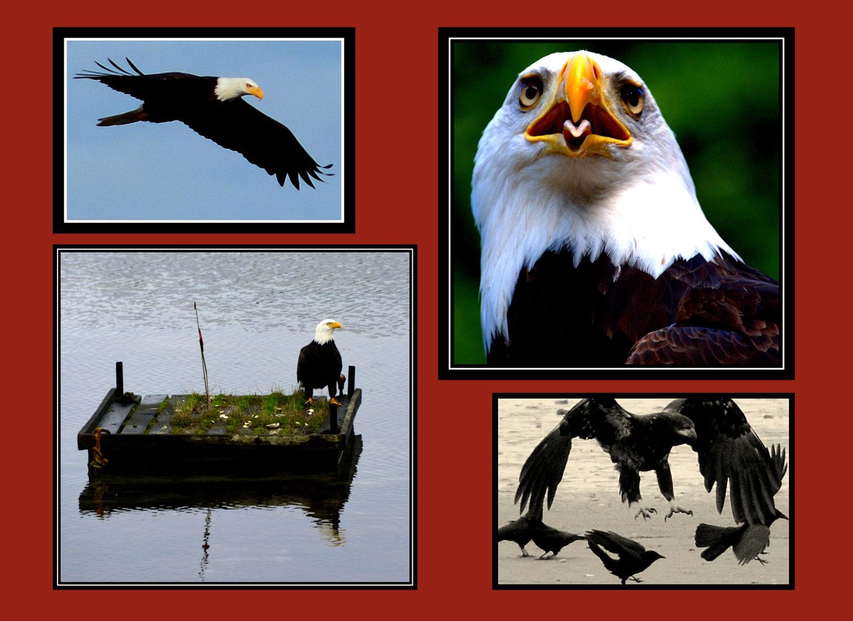 _012-015-Eagle-L