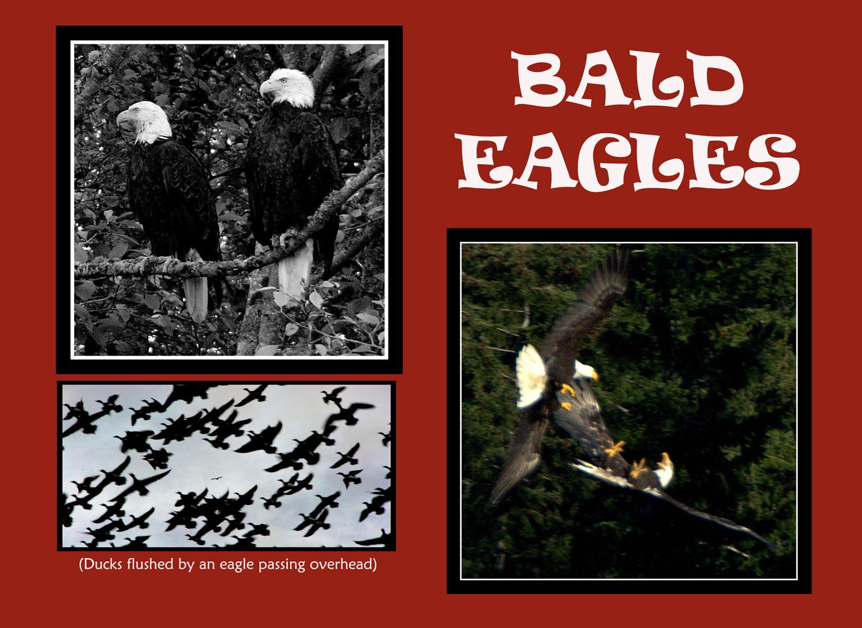 _013-015-Eagle-R