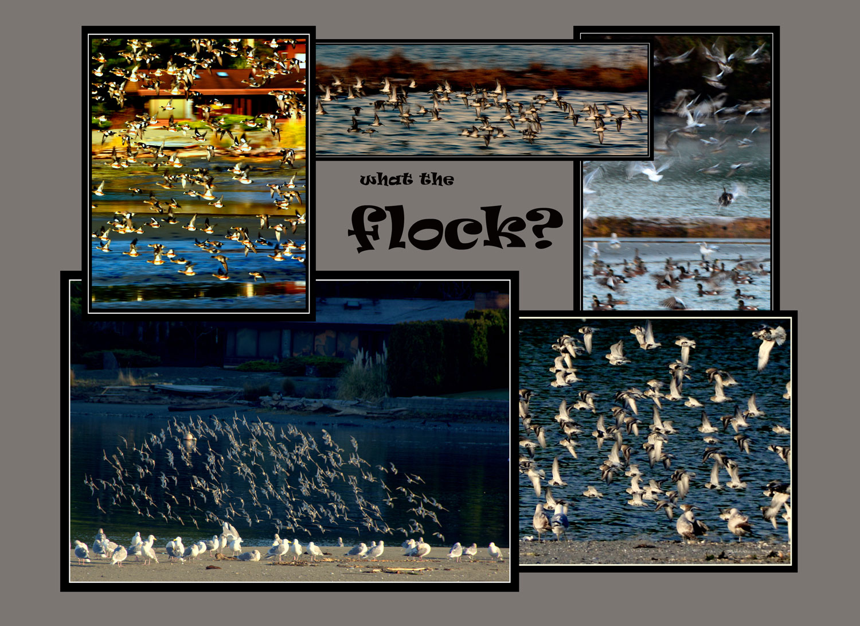 _018-016-Flock-L