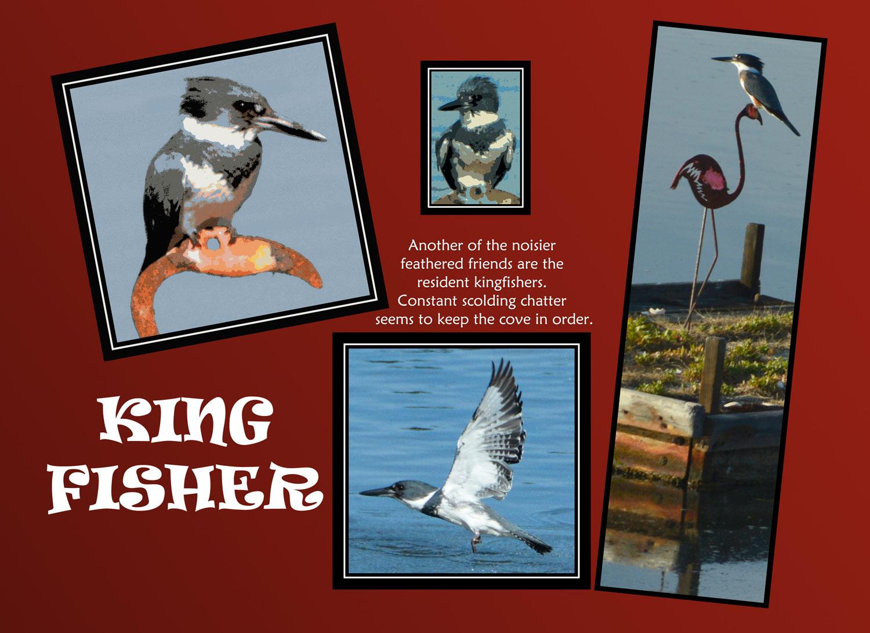 _019-007-Kingfisher-R