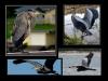 _016-017-Herons-L